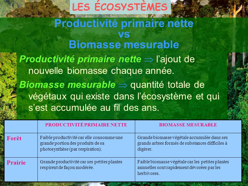 Productivité primaire nette vs Biomasse mesurable