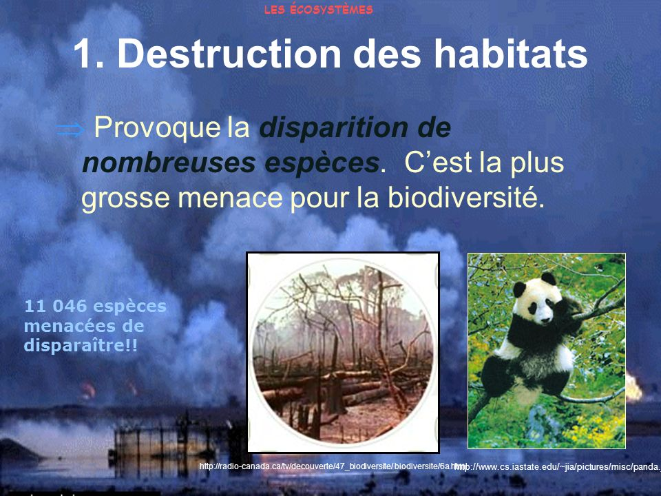 1. Destruction des habitats