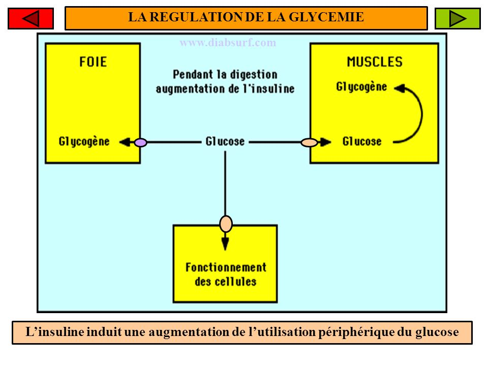 LA REGULATION DE LA GLYCEMIE