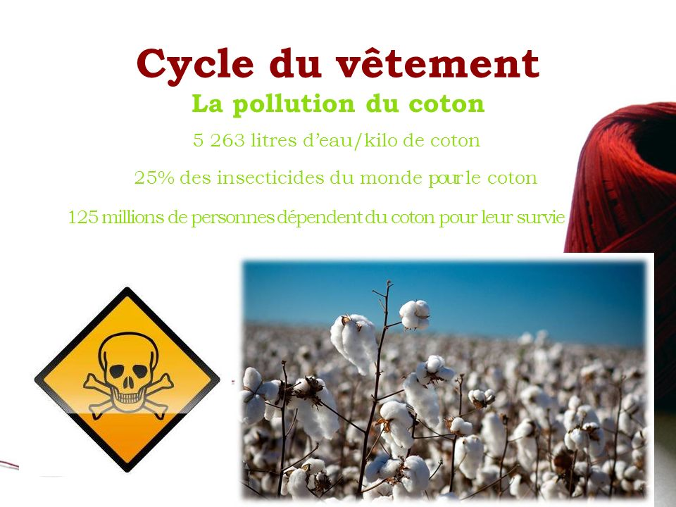 Cycle du vêtement La pollution du coton