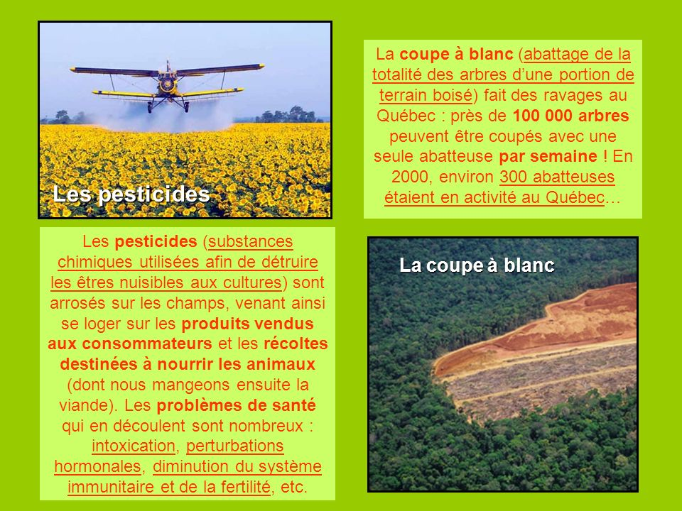 Les pesticides La coupe à blanc