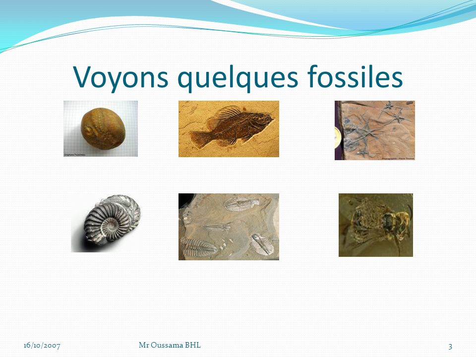 Voyons quelques fossiles
