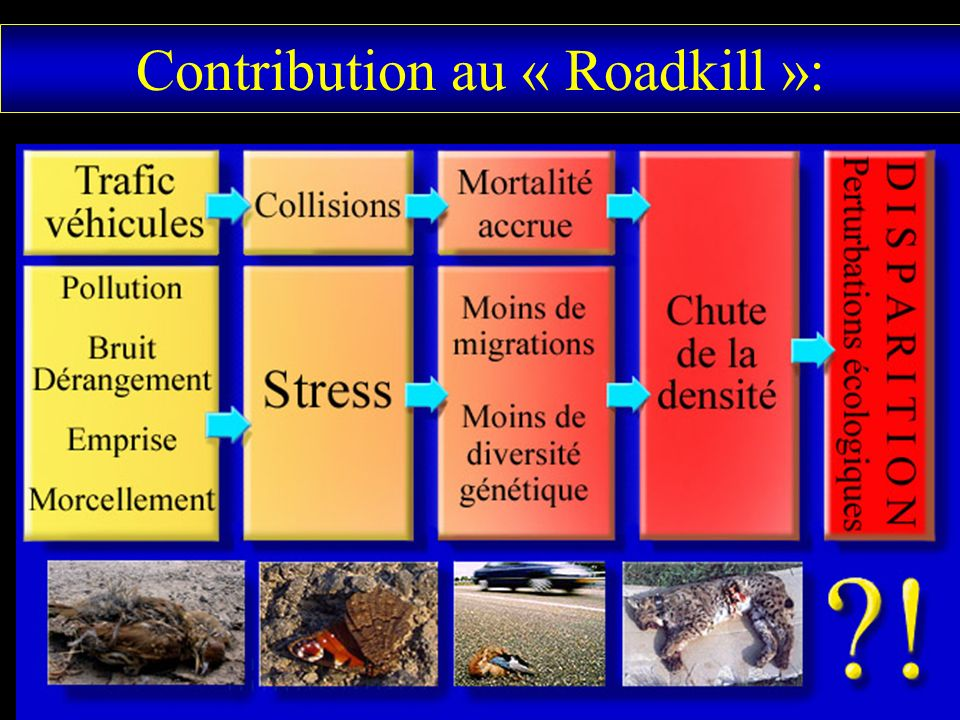 Contribution au « Roadkill »: