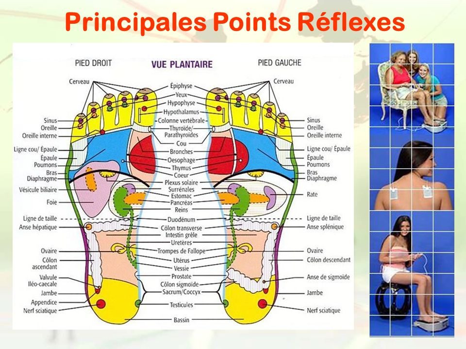 Principales Points Réflexes