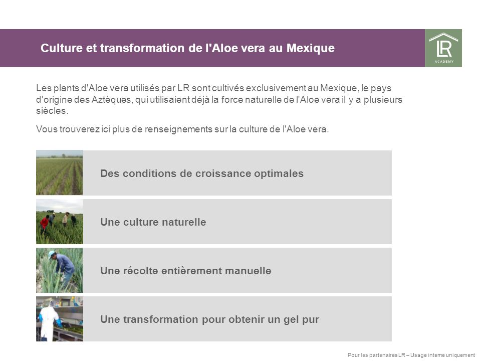 Culture et transformation de l Aloe vera au Mexique