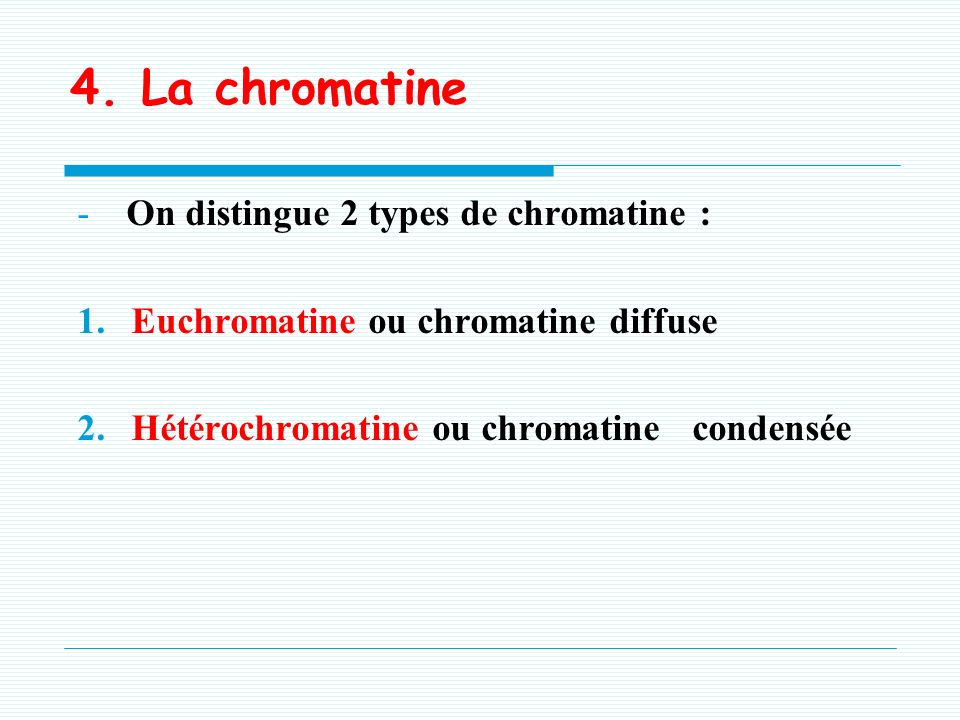 4. La chromatine On distingue 2 types de chromatine :