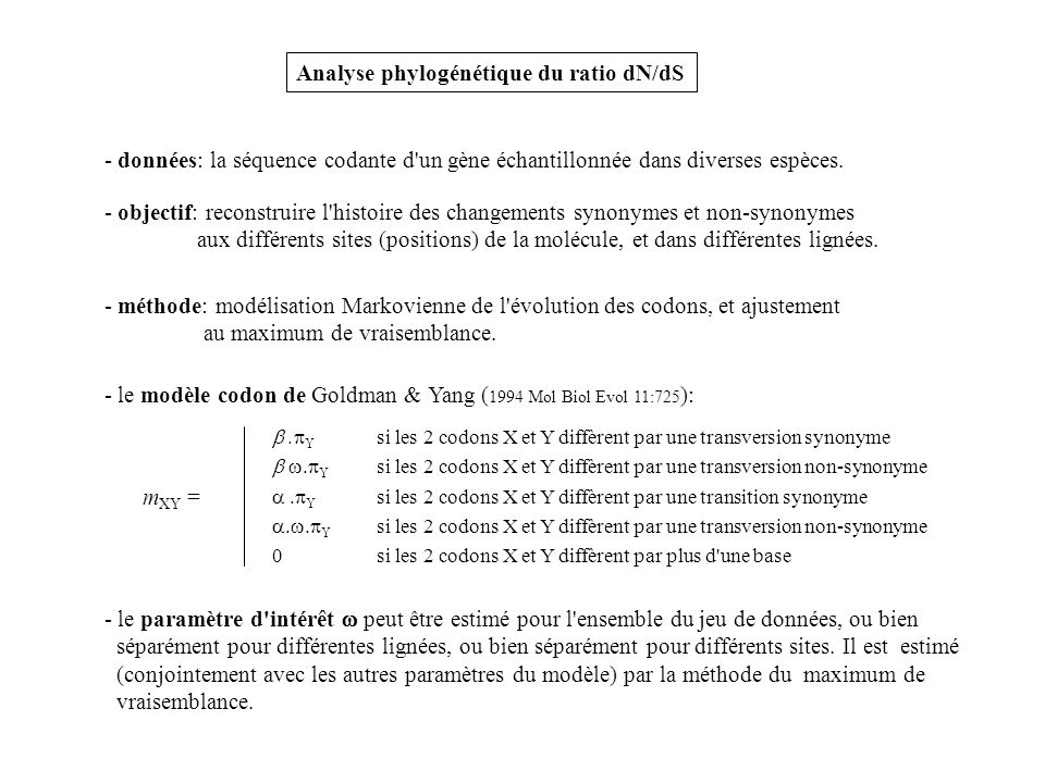 Analyse phylogénétique du ratio dN/dS