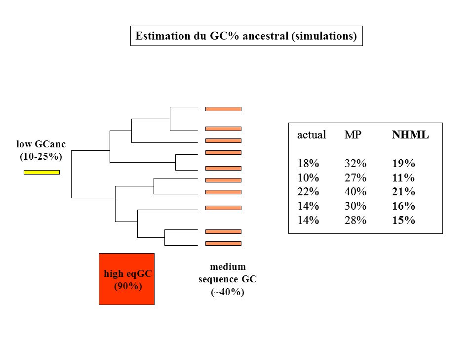 Estimation du GC% ancestral (simulations)