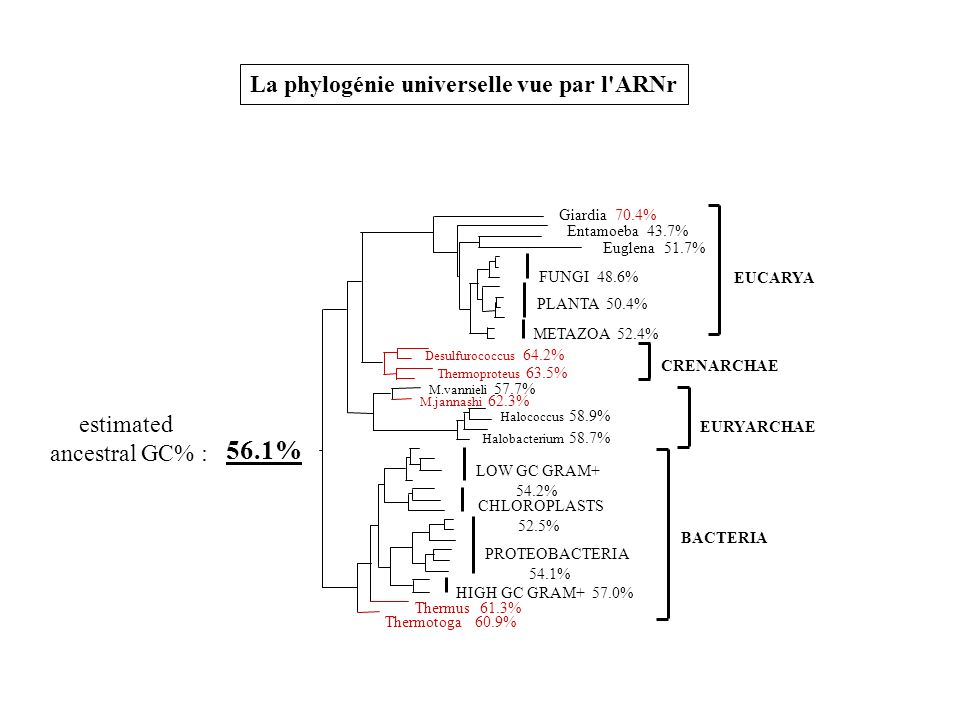 56.1% La phylogénie universelle vue par l ARNr estimated