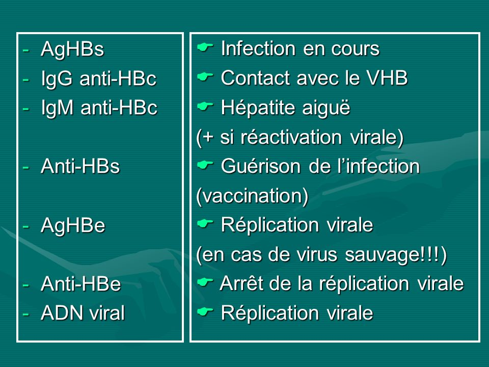 AgHBs IgG anti-HBc. IgM anti-HBc. Anti-HBs. AgHBe. Anti-HBe. ADN viral.  Infection en cours.