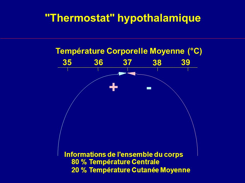 Thermostat hypothalamique