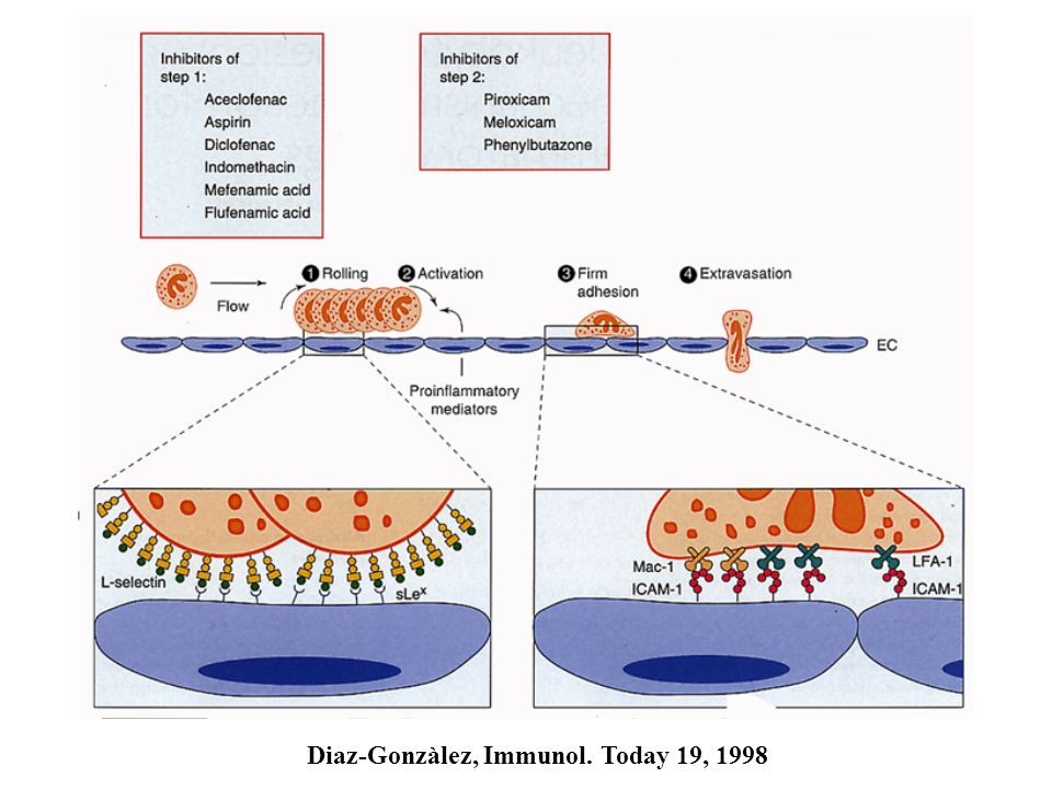 Diaz-Gonzàlez, Immunol. Today 19, 1998