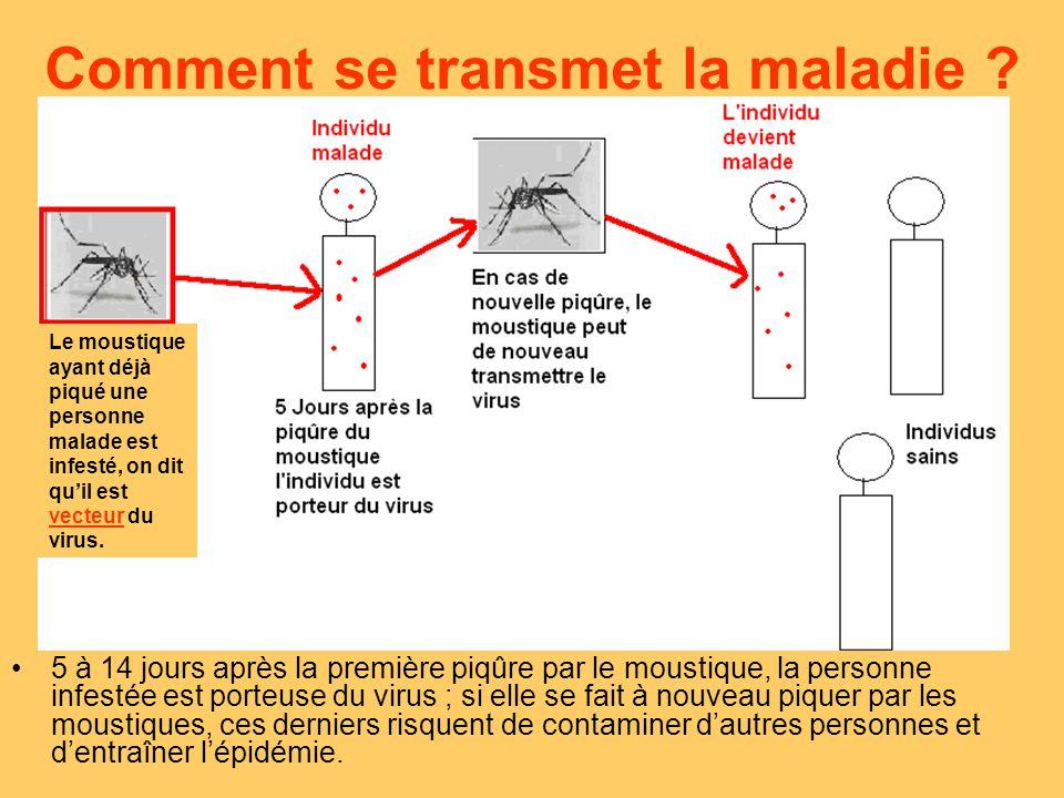 le chikungunya aedes albopictus moustique vecteur ppt video online t l charger. Black Bedroom Furniture Sets. Home Design Ideas