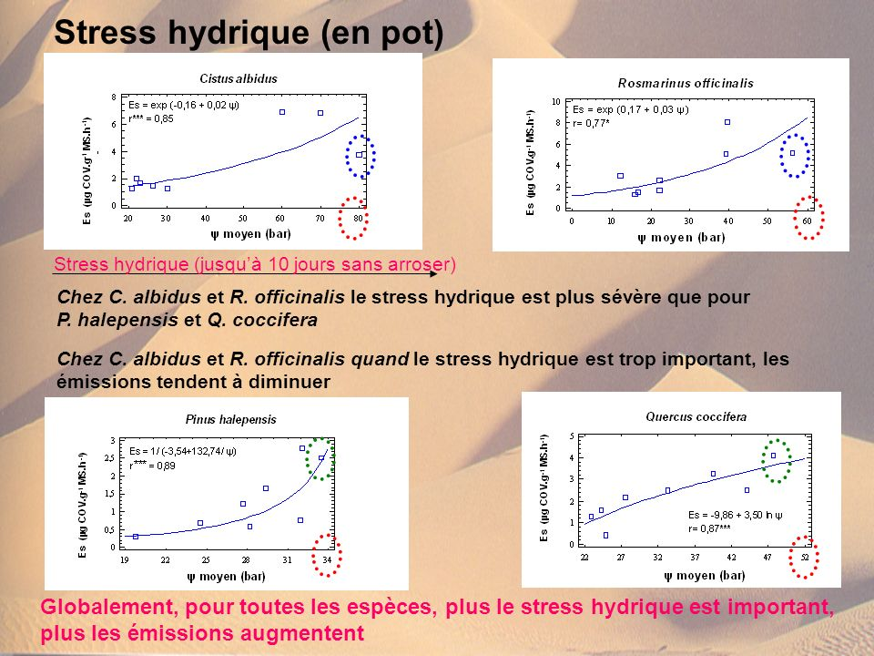 Stress hydrique (en pot)