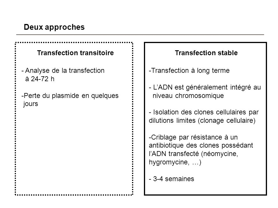 Transfection transitoire