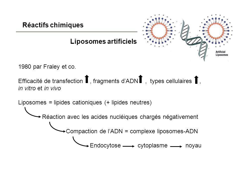 Liposomes artificiels