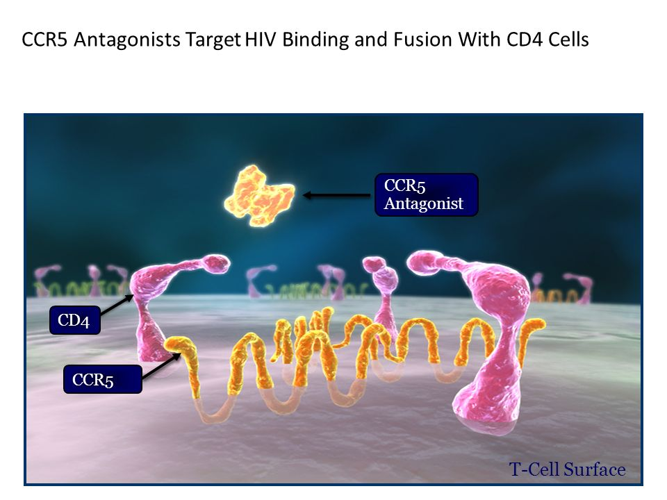 CCR5 Antagonists Target HIV Binding and Fusion With CD4 Cells