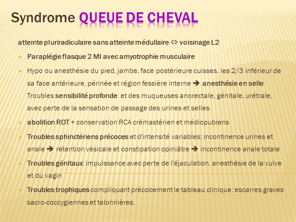 grosse queue Syndrom hamsters x