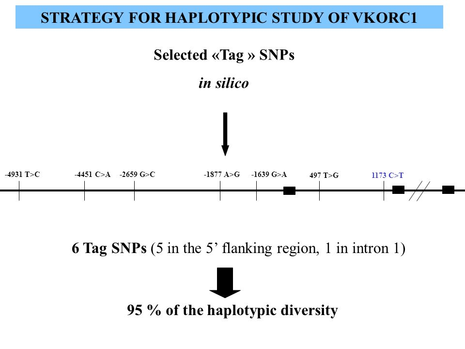 STRATEGY FOR HAPLOTYPIC STUDY OF VKORC1