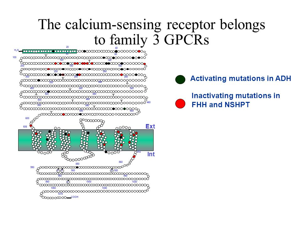 The calcium-sensing receptor belongs to family 3 GPCRs