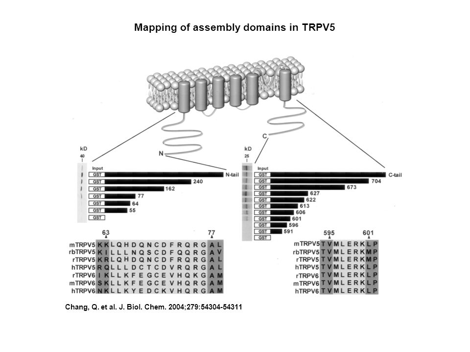 Mapping of assembly domains in TRPV5