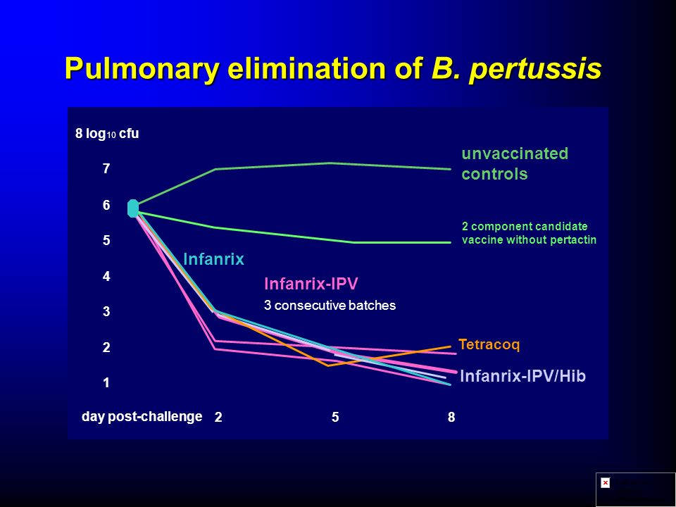 Pulmonary elimination of B. pertussis
