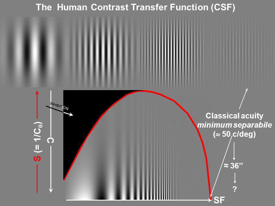 The Human Contrast Transfer Function (CSF)