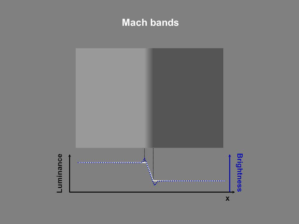 Mach bands Brightness Luminance x