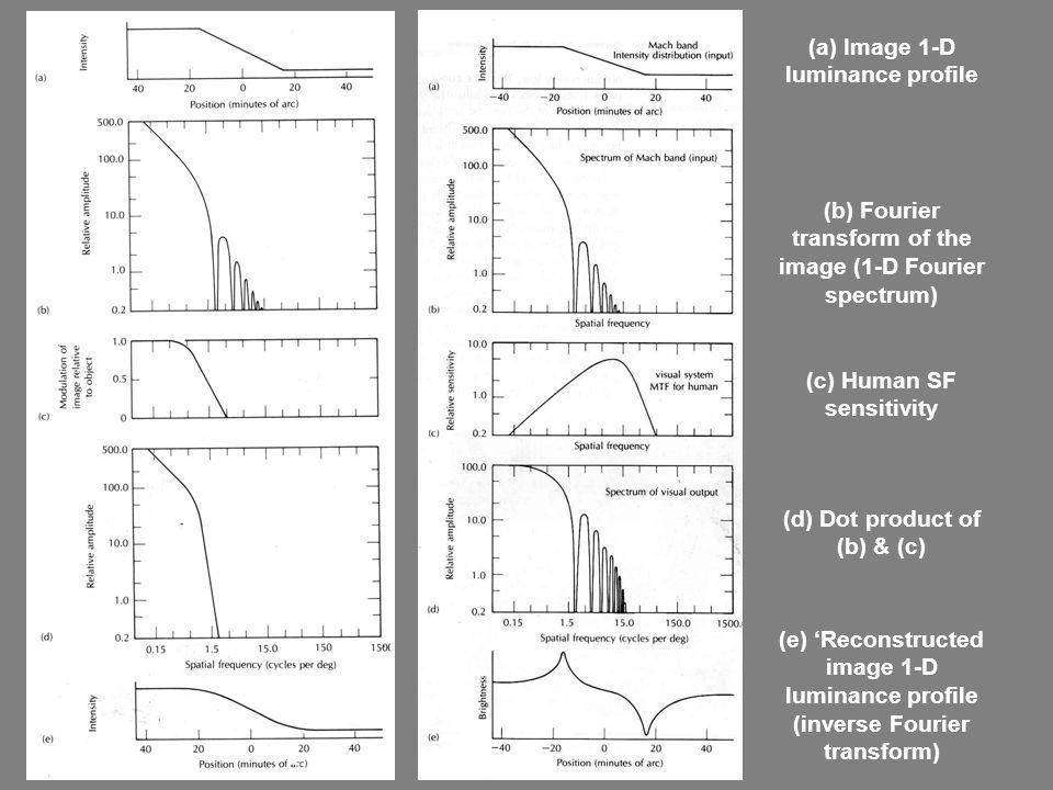 (a) Image 1-D luminance profile