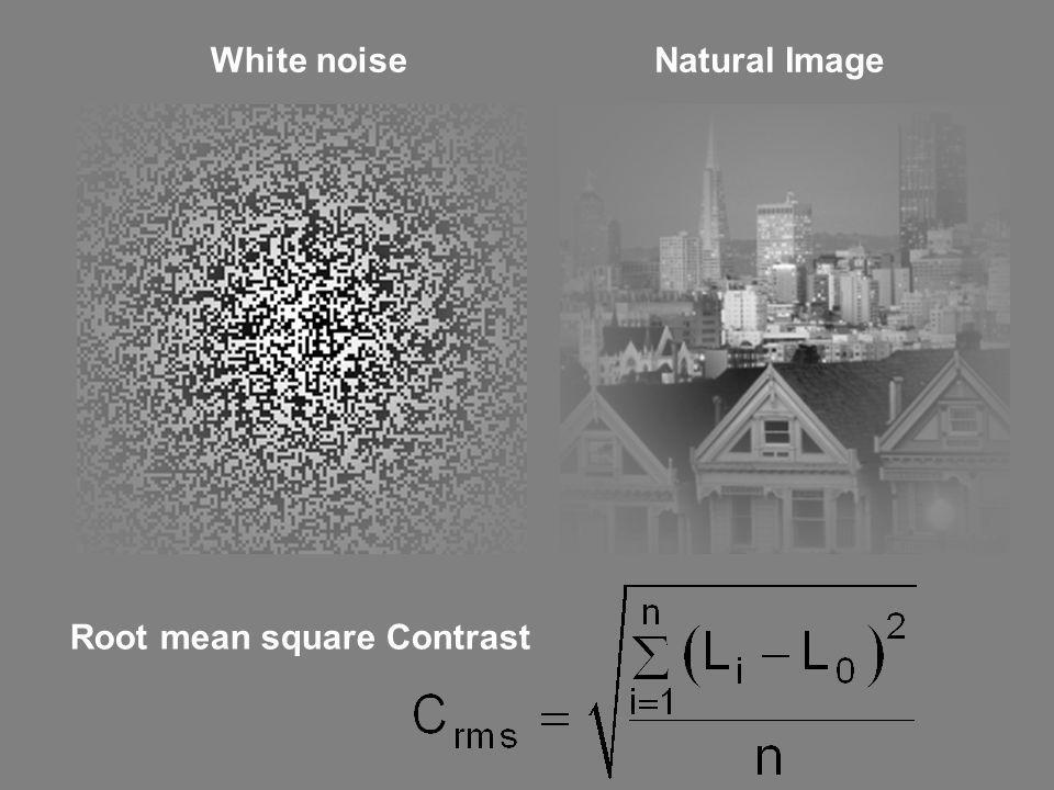 White noise Natural Image Root mean square Contrast