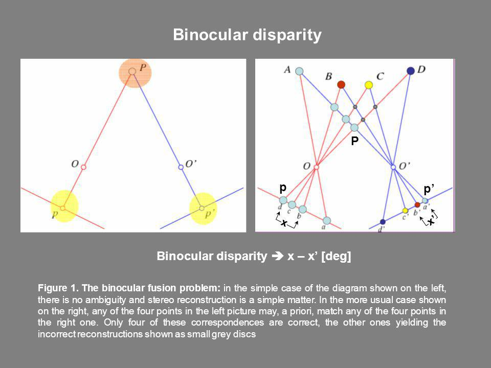 Binocular disparity P p p' Binocular disparity  x – x' [deg] x' x