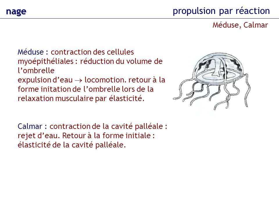 propulsion par réaction