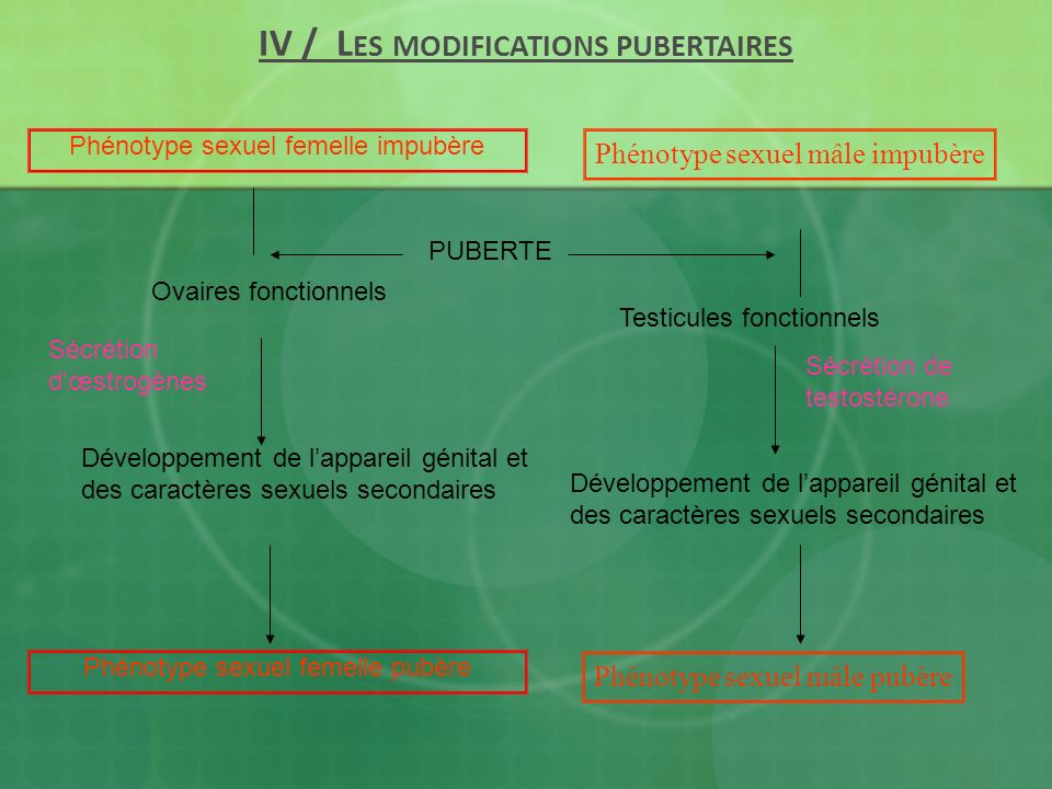 IV / Les modifications pubertaires