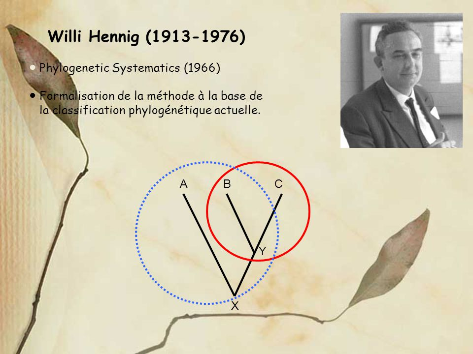 Willi Hennig ( ) ● Phylogenetic Systematics (1966)