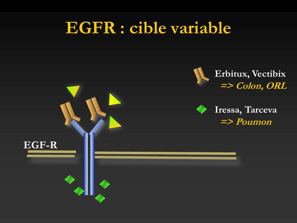 EGFR : cible variable EGF-R Erbitux, Vectibix => Colon, ORL