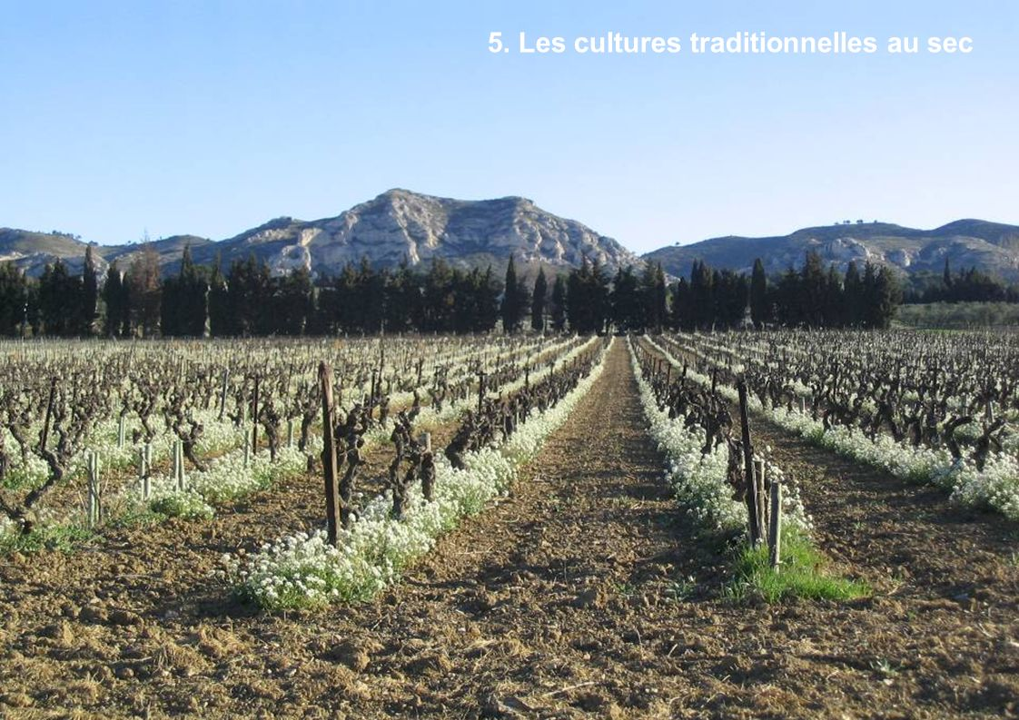 5. Les cultures traditionnelles au sec