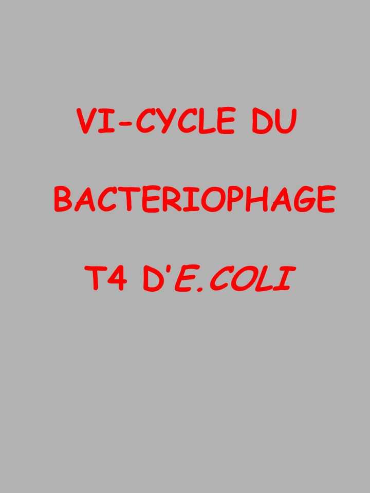 VI-CYCLE DU BACTERIOPHAGE T4 D'E.COLI