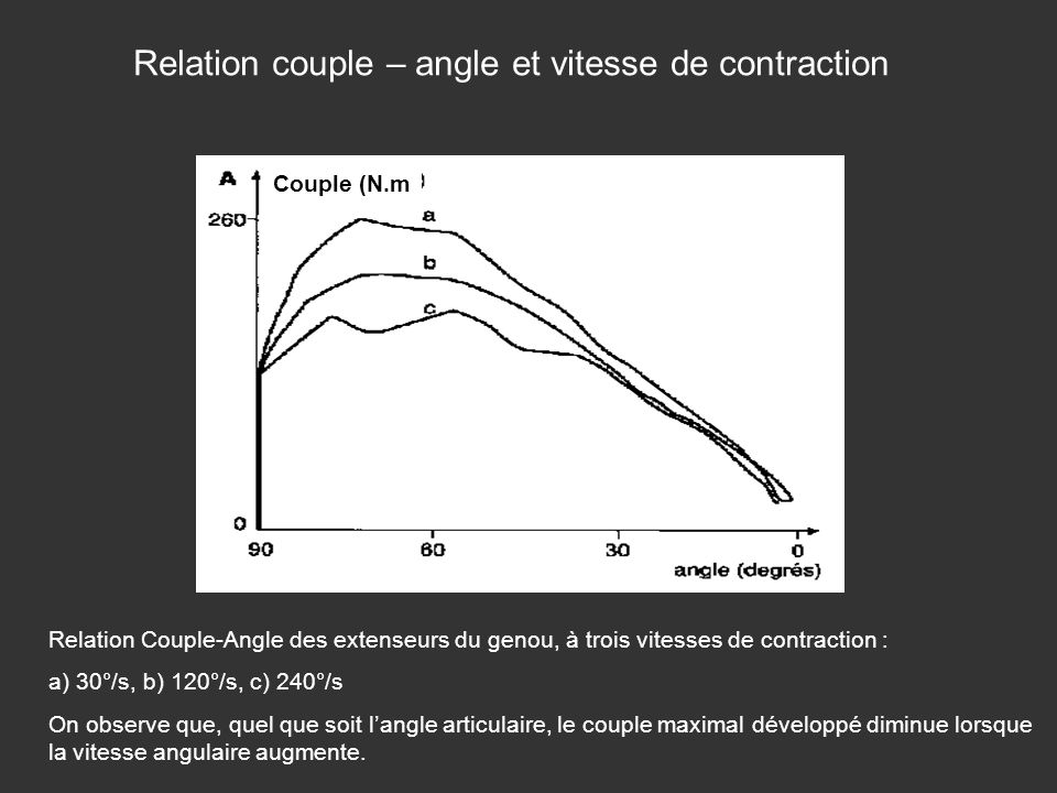 Relation couple – angle et vitesse de contraction