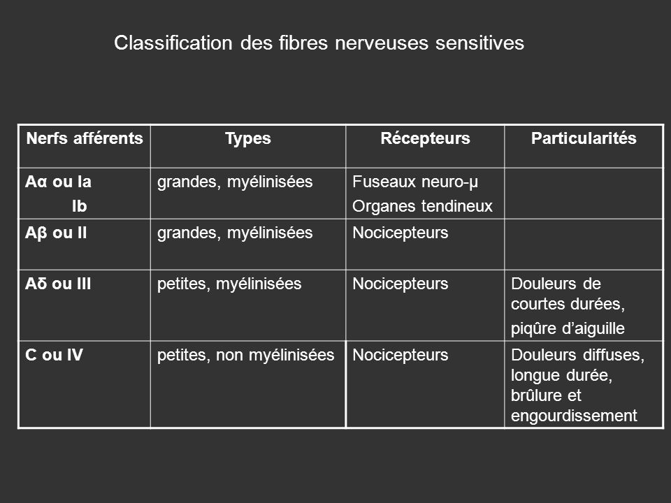 Classification des fibres nerveuses sensitives