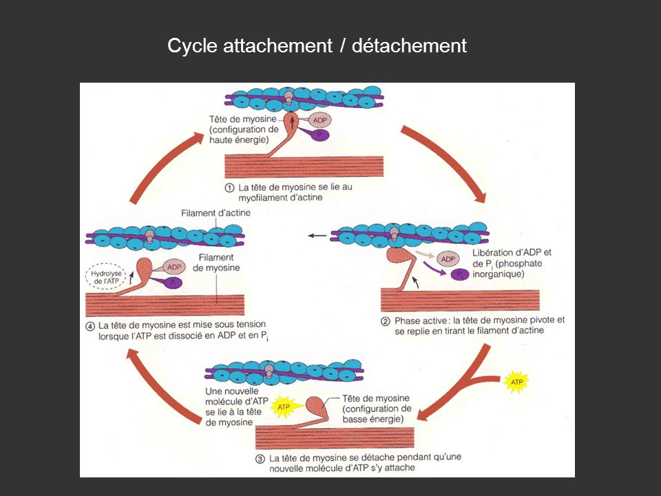 Cycle attachement / détachement