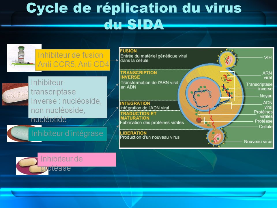 Cycle de réplication du virus du SIDA