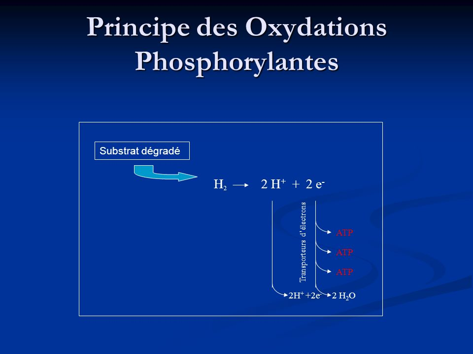 Principe des Oxydations Phosphorylantes