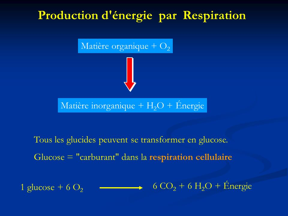 Production d énergie par Respiration