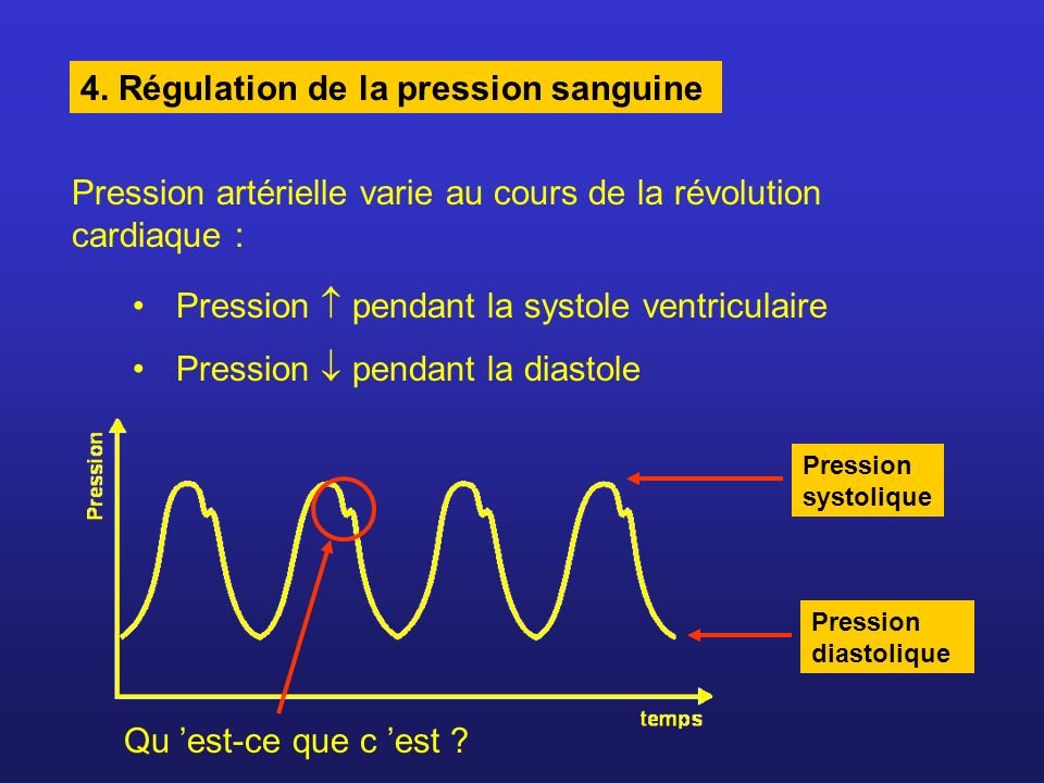 4. Régulation de la pression sanguine