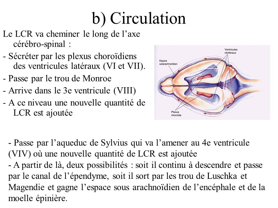 b) Circulation Le LCR va cheminer le long de l'axe cérébro-spinal :