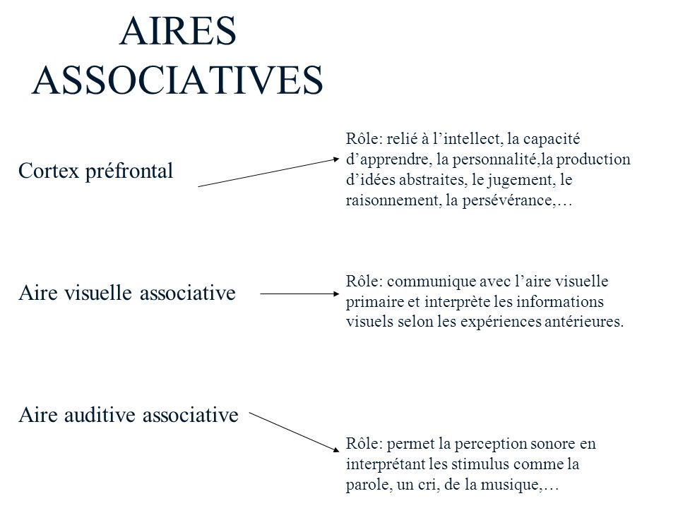 AIRES ASSOCIATIVES Cortex préfrontal Aire visuelle associative