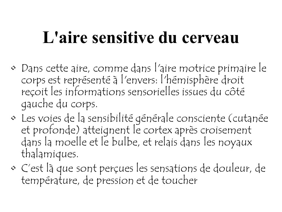 L aire sensitive du cerveau