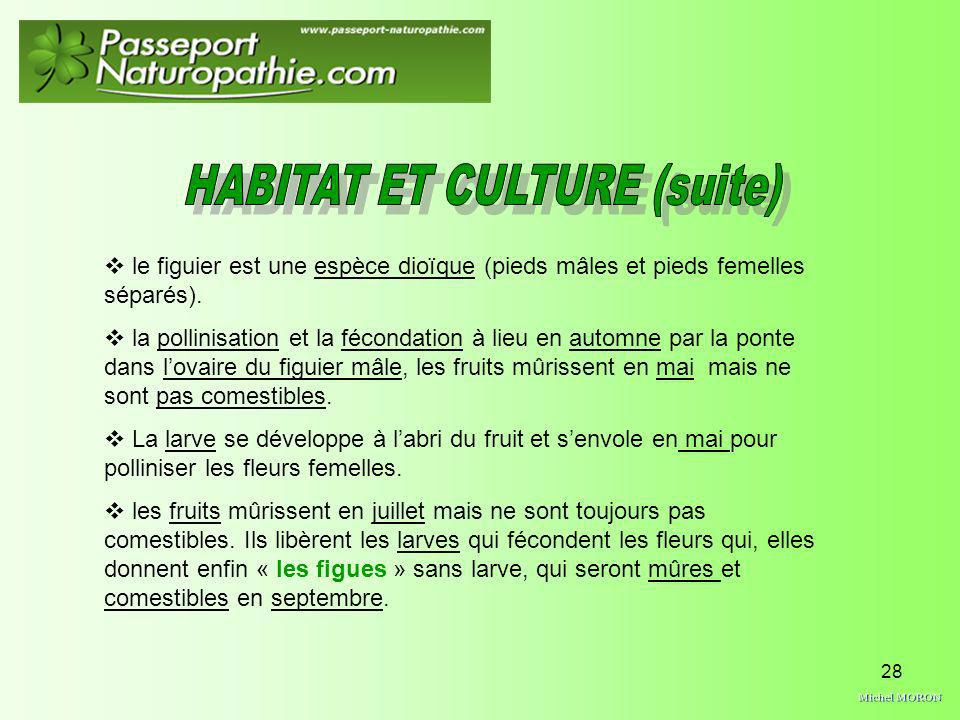 HABITAT ET CULTURE (suite)
