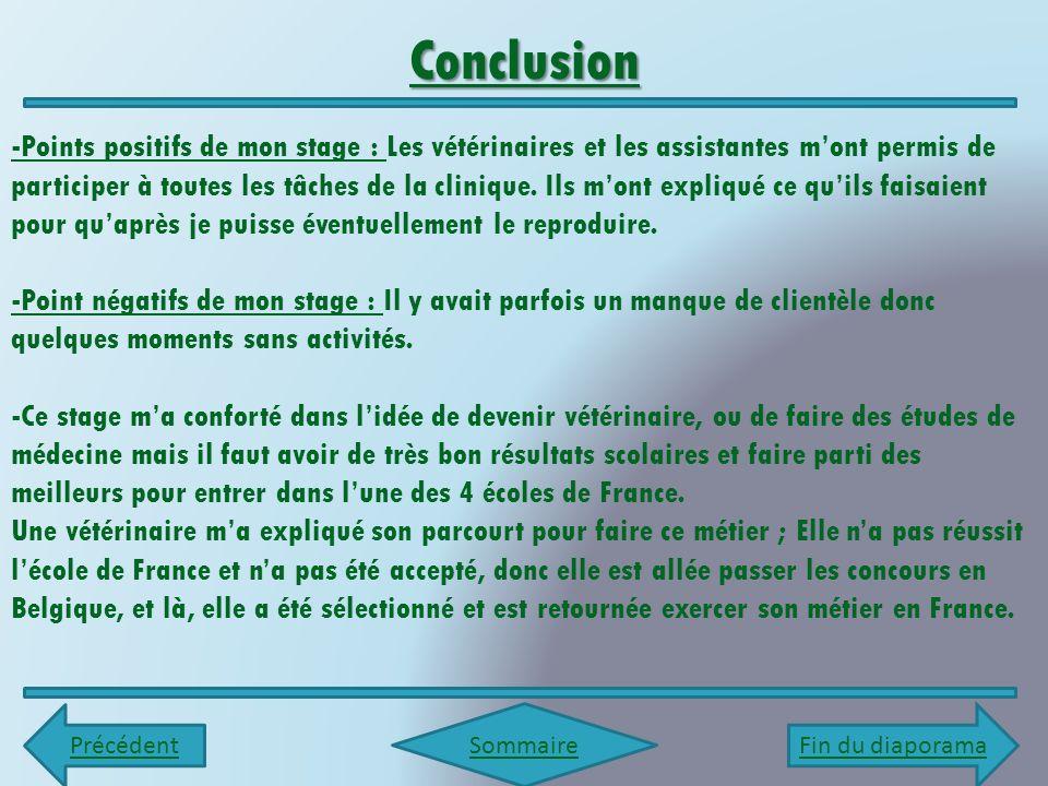 Rapport De Stage En Entreprise Clinique Vétérinaire Dr