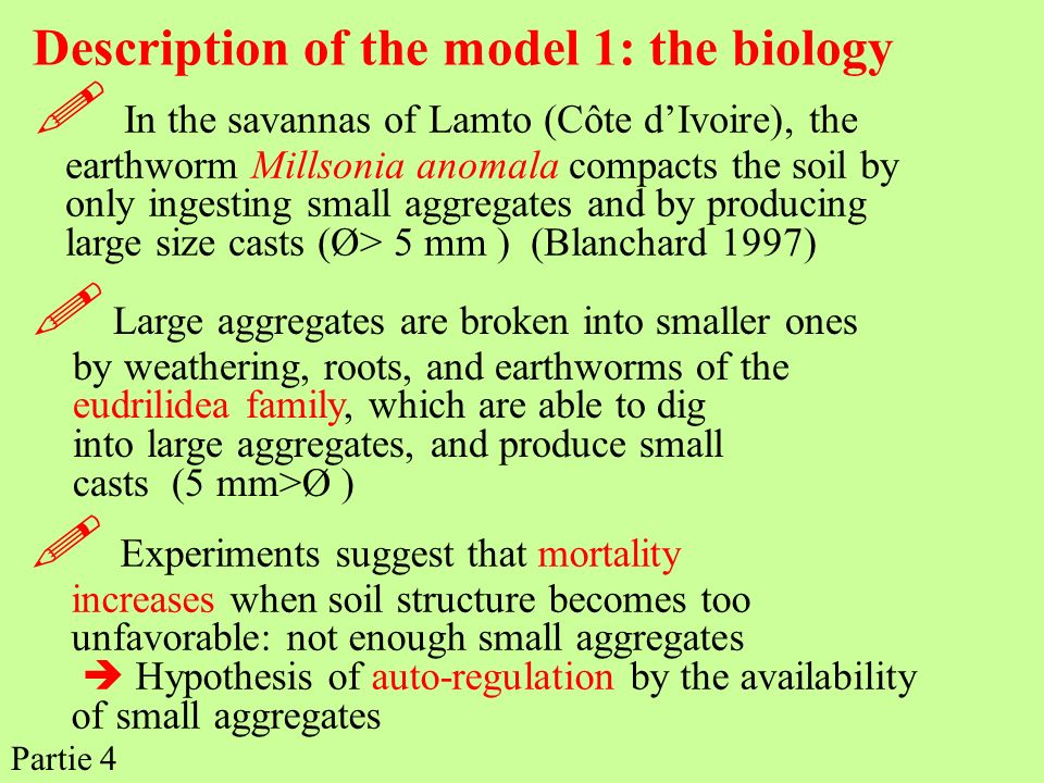 Description of the model 1: the biology